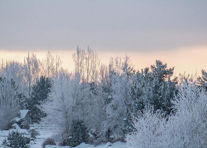 Christmas Greeting Card featuring the photograph Sunrise Glos Behind Trees Frozen Trees by Travers Morgan