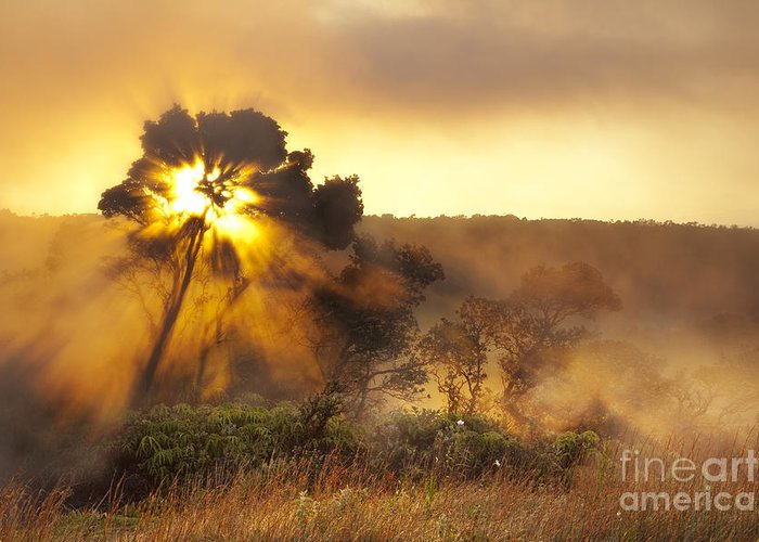 Hawaii Greeting Card featuring the photograph Sunrise Over Hawaii Volcano Steam Vents by Charmian Vistaunet