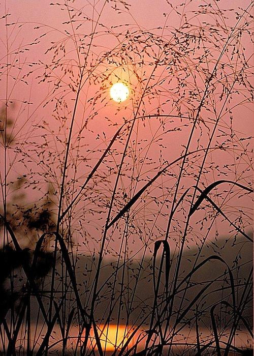 Sun Greeting Card featuring the photograph Sunrise Through The Tall Grass by Thomas Firak