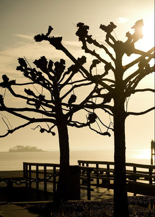 Lanscape Greeting Card featuring the photograph Sunrise Trees by Tom Rickborn