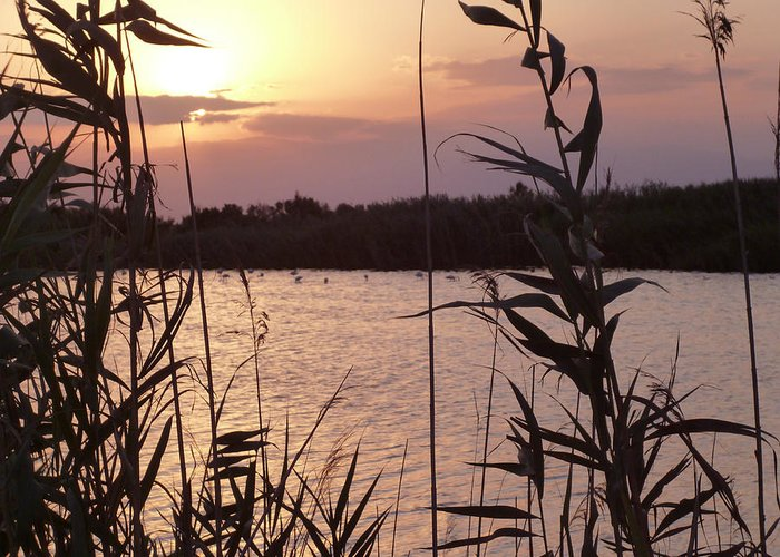 Almeria Greeting Card featuring the photograph Sunset And Water by Laura Greco