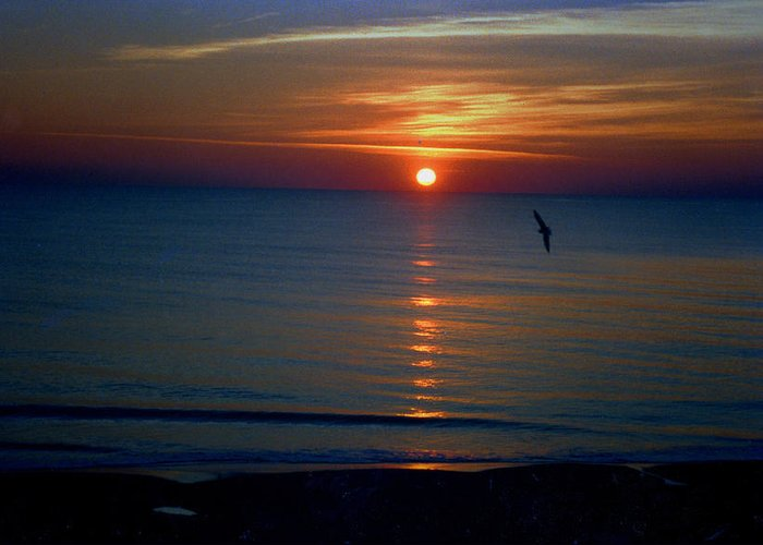 Bird Greeting Card featuring the photograph Sunset Bird by Russ Mullen