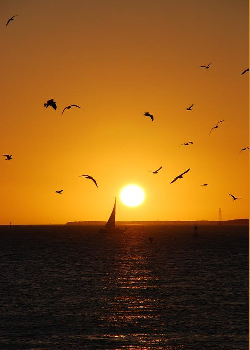 Sunset Greeting Card featuring the photograph Sunset Birds Key West by Susanne Van Hulst