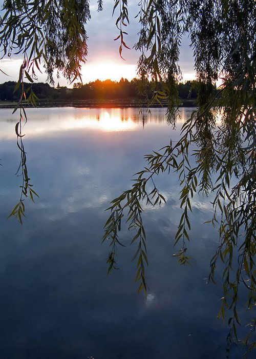Nature Greeting Card featuring the photograph Sunset by Daniel Csoka