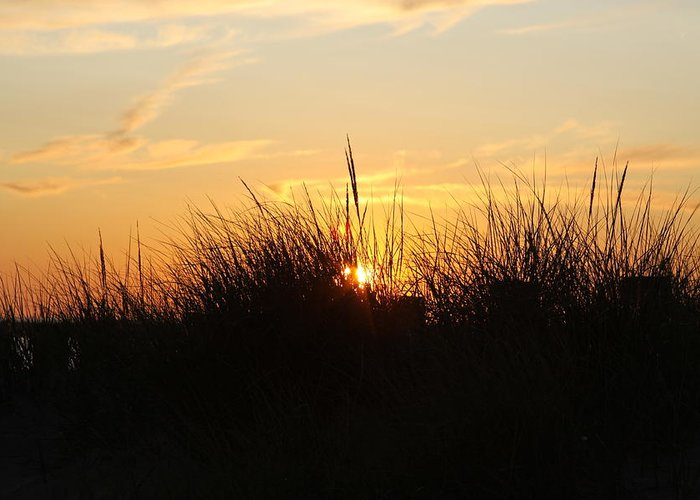 Sunset Greeting Card featuring the photograph Sunset In The Grass by Chuck Bailey