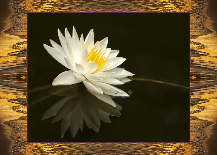 Nature Photos Greeting Card featuring the photograph Sunset Lily by Bell And Todd