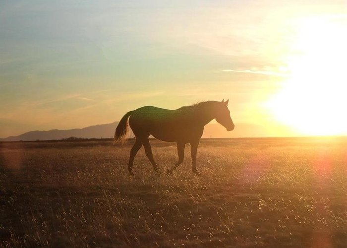 Horse Greeting Card featuring the photograph Sunset Mare by Stephanie Russell