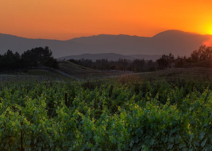 California Greeting Card featuring the photograph Sunset Over The Vineyard by Peter Tellone