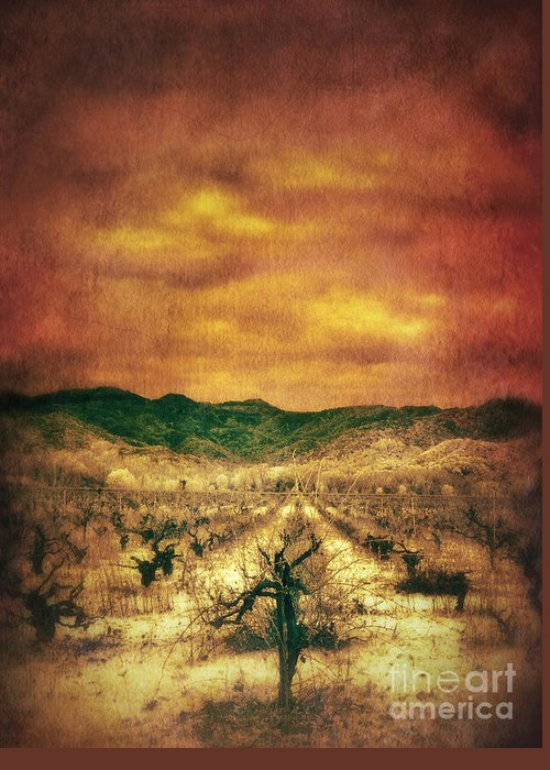 Vineyard In Winter Greeting Card featuring the photograph Sunset Over Vineyard by Jill Battaglia