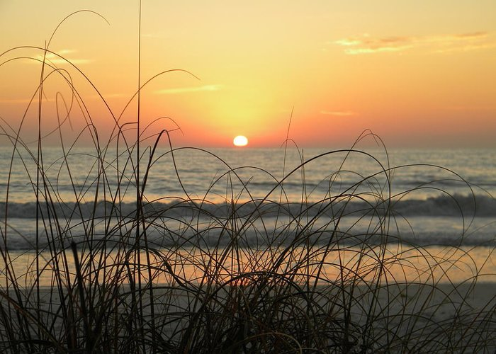 Paradise Greeting Card featuring the photograph Sunset Sea Grass by Sean Allen