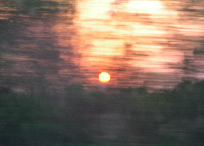 Blur Greeting Card featuring the photograph Sunset Through A Pecan Grove by Peter McIntosh