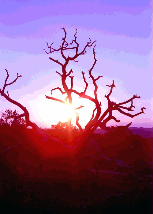 Desert Greeting Card featuring the photograph Sunset Through Silhouetted Tree In Desert 2 by Steve Ohlsen