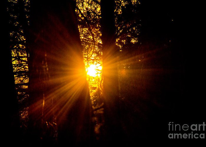 Christians Greeting Card featuring the photograph Sun Bursting Through The Trees, Chiloquin Oregon by Tirza Roring