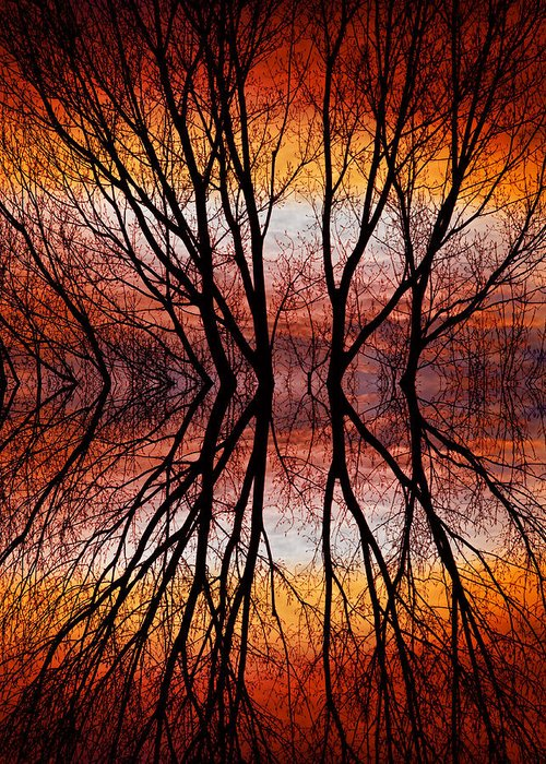 Abstracts Greeting Card featuring the photograph Sunset Tree Silhouette Abstract 2 by James BO Insogna