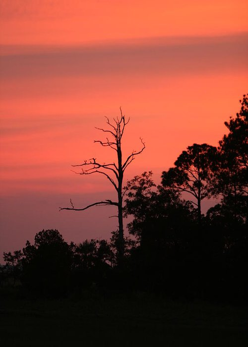 Sunset Greeting Card featuring the photograph Sunset by Walt Reece