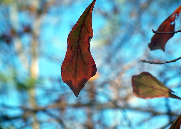 Leaves Greeting Card featuring the photograph Surviving Winter by Alexandra Harrell