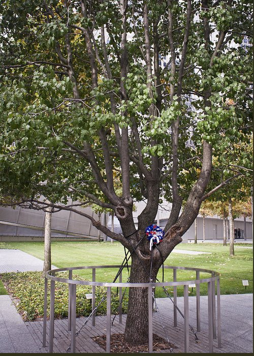 World Trade Center Greeting Card featuring the photograph Survivor Tree by Teresa Mucha