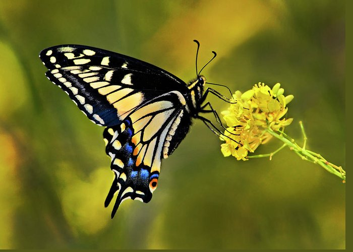 Butterfly Greeting Card featuring the photograph Swallowtail Butterfly by Armando Picciotto