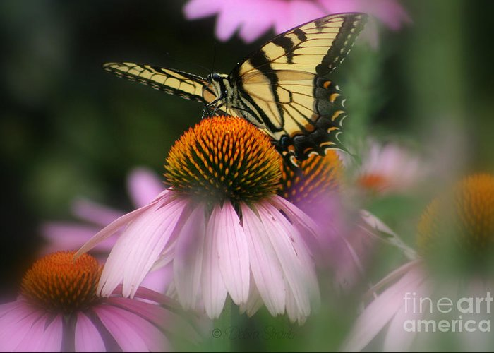 Butterflies Greeting Card featuring the photograph Swallowtail On Coneflower by Debra Straub