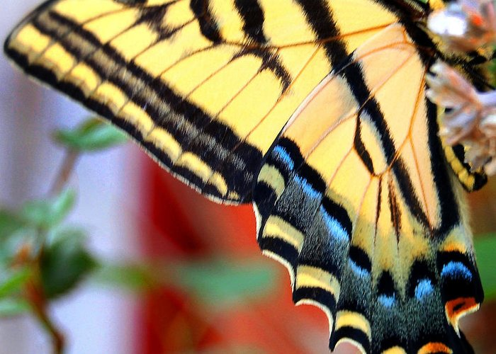 Photography Greeting Card featuring the photograph Swallowtail Wing by Heather S Huston
