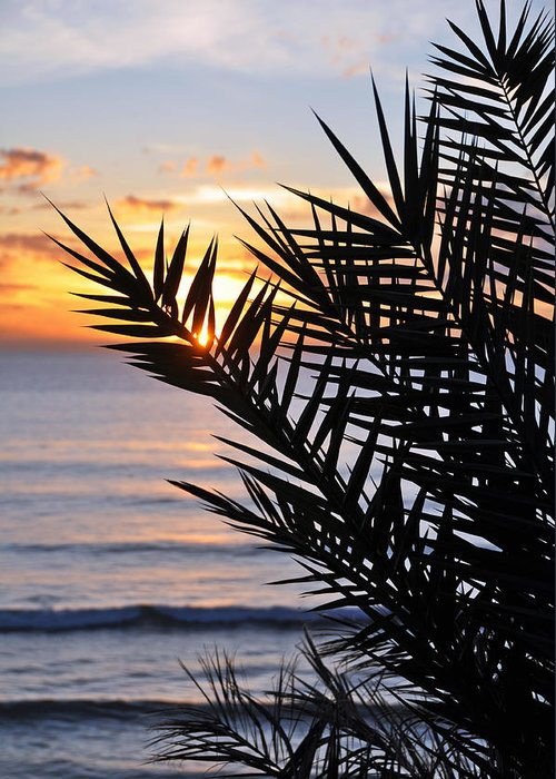 Swamis Palm Beach Photograph Landscape Sunset Palm Tree Encinitas San Diego California Coast Silhouette Greeting Card featuring the photograph Swamis Palm by Kelly Wade