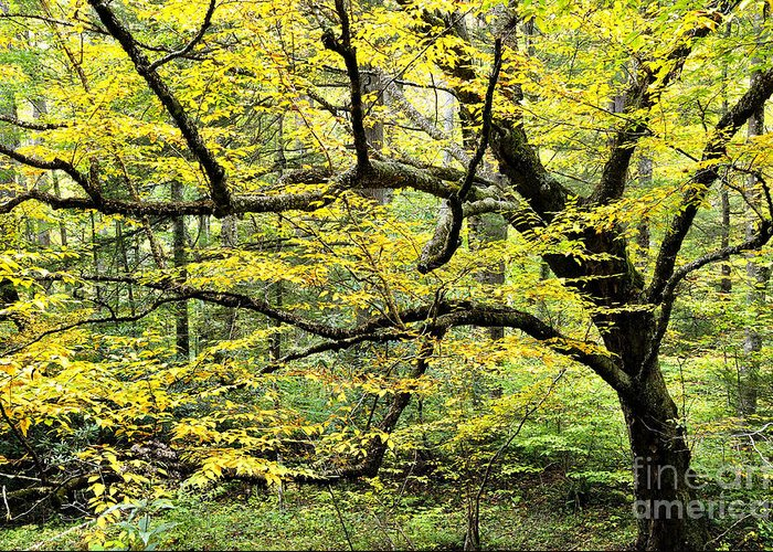 Yellow Birch Greeting Card featuring the photograph Swamp Birch In Autumn by Thomas R Fletcher