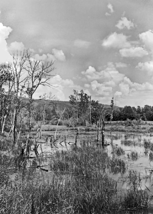 Ansel Adams Greeting Card featuring the photograph Swamp by Curtis J Neeley Jr