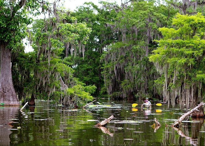 Swamp Greeting Card featuring the photograph Swamp Stroll by Matthew Felder