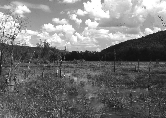 Ansel Adams Greeting Card featuring the photograph swamp1-OEM by Curtis J Neeley Jr