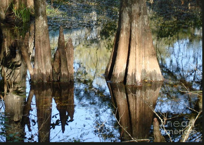 Nature Greeting Card featuring the photograph Swampy Knees by Robyn Leakey