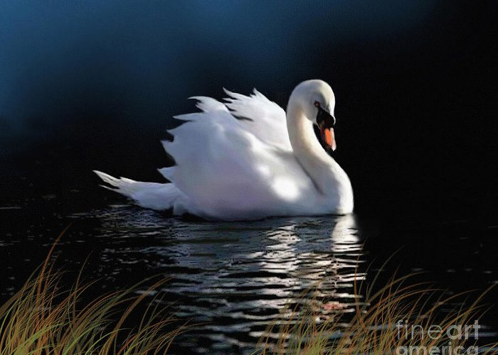 Swan Greeting Card featuring the painting Swan Elegance by Robert Foster