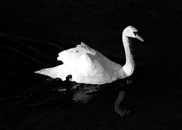 Swan Greeting Card featuring the photograph Swan In Blackwater by John Bradburn