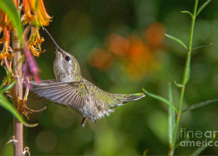 Hummingbird Greeting Card featuring the photograph Sweet Nectar by Lisa Manifold