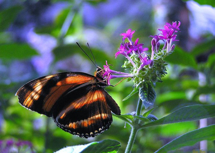 Butterfly Greeting Card featuring the photograph Sweet Nector by Louise Magno