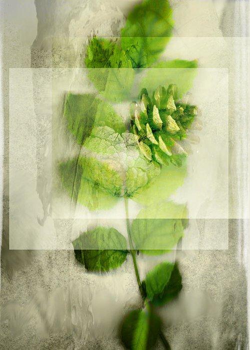 Sweet Rustic Pine Greeting Card featuring the digital art Sweet Rustic Pine by Dan Turner
