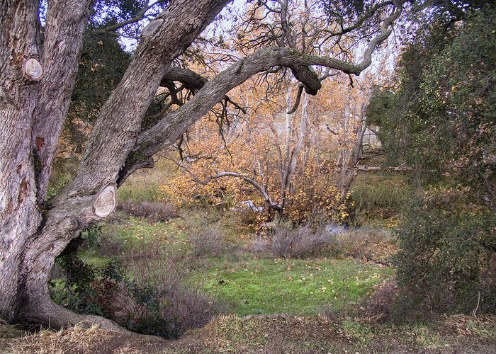 Landscape Greeting Card featuring the photograph Sycamore Grove Fall by Karen W Meyer