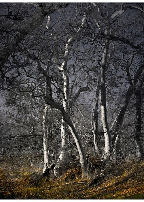Landscape Greeting Card featuring the photograph Sycamore Grove by Karen W Meyer