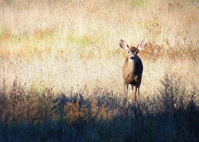 Deer Art Greeting Card featuring the photograph Sycamore Grove Series 2 by Carol Groenen