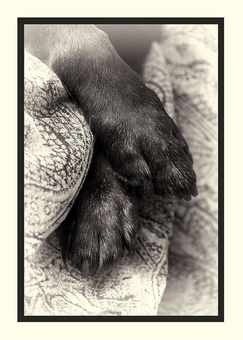 Dog Greeting Card featuring the photograph Sympathy by Petra Mayer