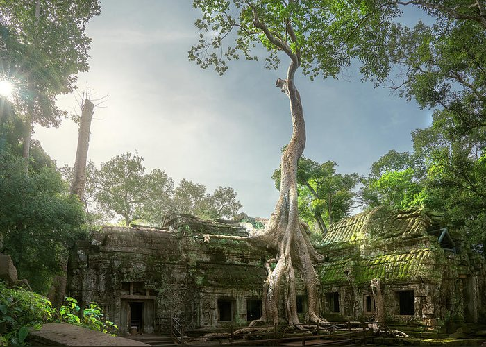 Angkor Greeting Card featuring the photograph Ta Prohm Temple by Anek Suwannaphoom
