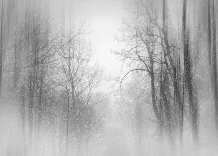 Snow Scene Greeting Card featuring the photograph Take Me There by Diana Angstadt