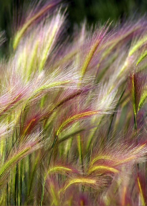 Plants Greeting Card featuring the photograph Tall Grass by Marty Koch
