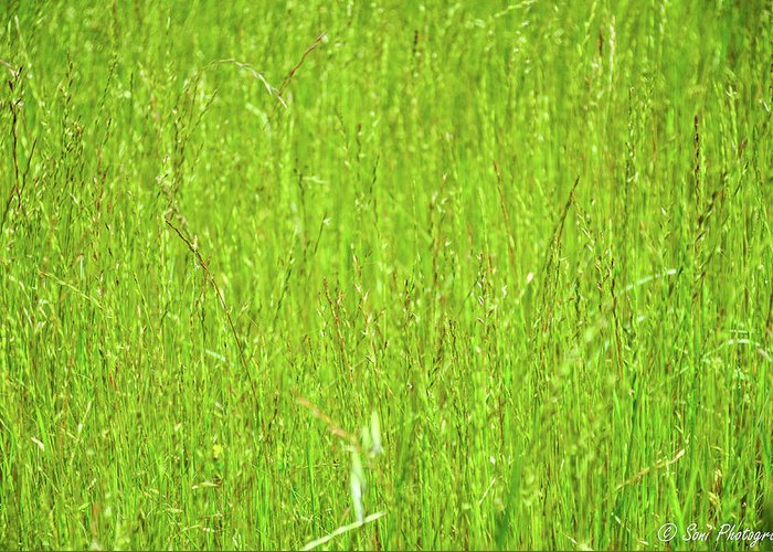 Tall Grassy Meadow Greeting Card featuring the photograph Tall Grassy Meadow by Soni Macy