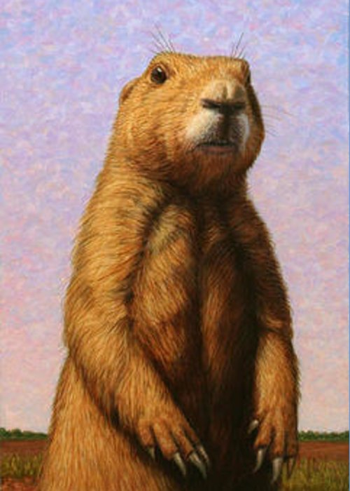 Woodchuck Greeting Cards