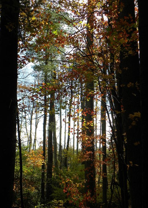 Photography Greeting Card featuring the photograph Tall Trees by Cindy Gacha