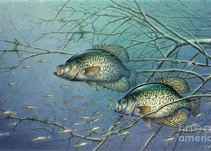 Jon Q Wright Greeting Card featuring the painting Tangled Cover Crappie II by JQ Licensing
