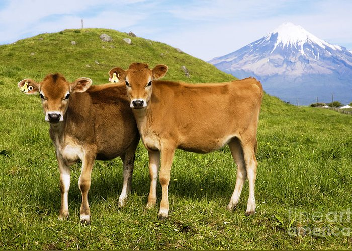 Adorable Greeting Card featuring the photograph Taranaki, Dairy Cows by Himani - Printscapes