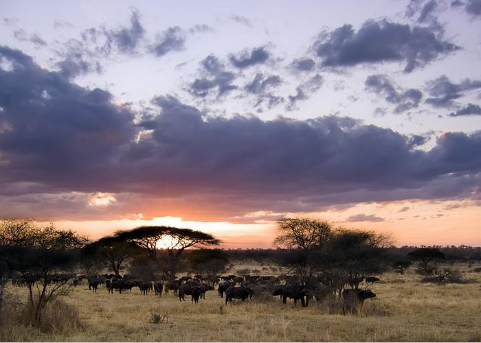 3scape Photos Greeting Card featuring the photograph Tarangire Sunset by Adam Romanowicz
