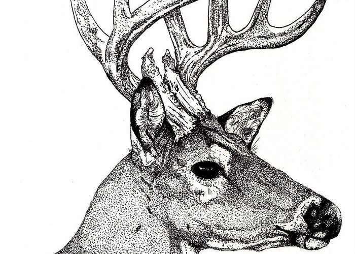 Deer Greeting Card featuring the drawing Ten Point Buck by Debra Sandstrom