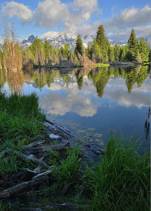 Grand Teton National Park Greeting Card featuring the photograph Teton Reflection In Schwabacher Landing by Ray Mathis